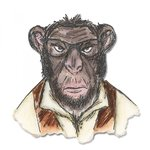 Sizzix - Tim Holtz - Alterations Collection - Framelits Dies - Hipster Chimp