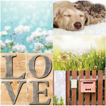 Websters Pages - Nest Collection - 12 x 12 Vellum - At Home